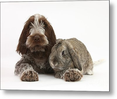 Puppy And Rabbt Metal Print by Mark Taylor