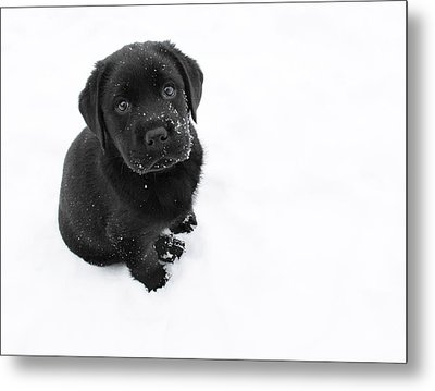 Puppy In The Snow Metal Print by Larry Marshall
