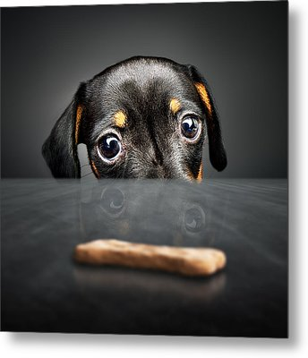 Puppy Longing For A Treat Metal Print by Johan Swanepoel