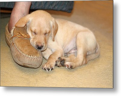Puppy Sleeping On Daddy's Foot Metal Print