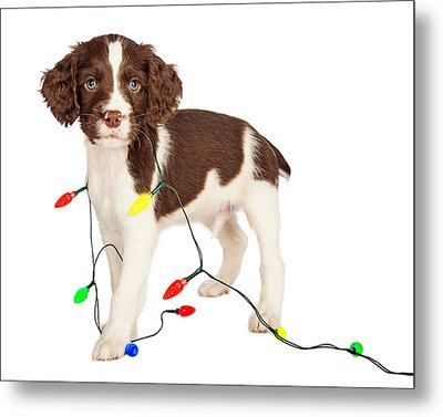 Puppy Wrapped In Christmas Lights Metal Print