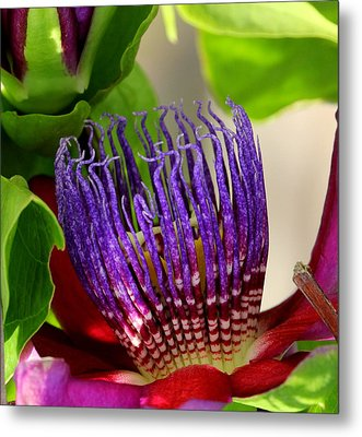 Puprle Passion Metal Print