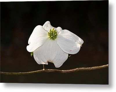 Pure White Metal Print by Linda Brown