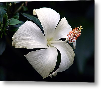 Metal Print featuring the photograph Purity by Blair Wainman