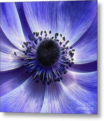Purple Anemone Macro Metal Print by Sue Melvin