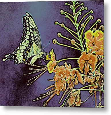 Purple Butterfly  Metal Print by Rose  Hill