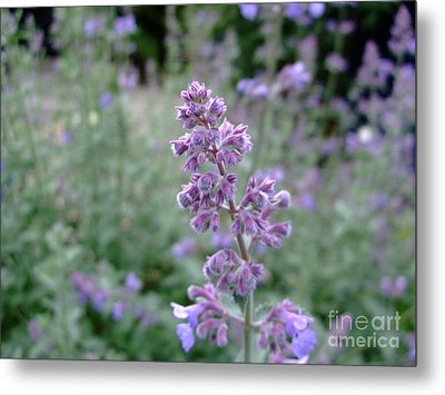 Purple Cat Mint Metal Print