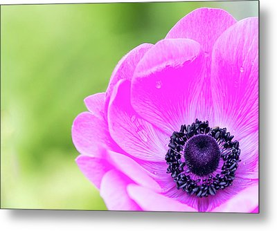 Metal Print featuring the photograph Purple Center by Rebecca Cozart