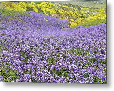 Metal Print featuring the photograph Purple  Covered Hillside by Marc Crumpler