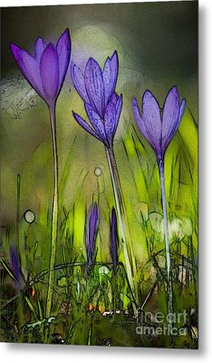 Metal Print featuring the photograph Purple Crocus Flowers by Jean Bernard Roussilhe