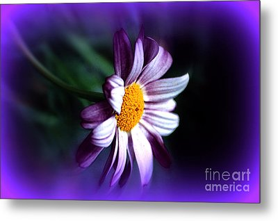 Metal Print featuring the photograph Purple Daisy Flower by Susanne Van Hulst