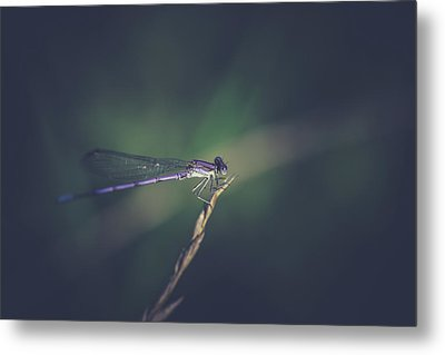 Metal Print featuring the photograph Purple Damsel by Shane Holsclaw