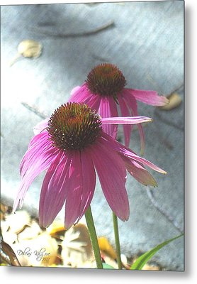Purple Echinacea Metal Print