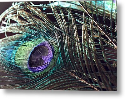 Purple Feather With Dark Background Metal Print by Angela Murdock