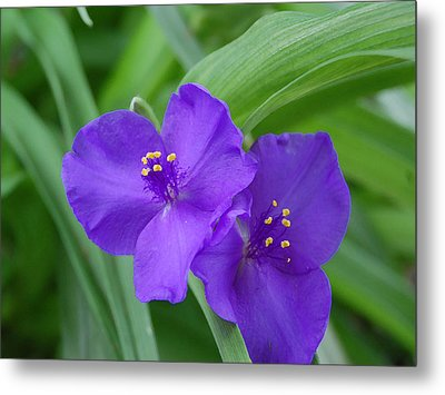 Purple Flower Metal Print by Audrey Venute