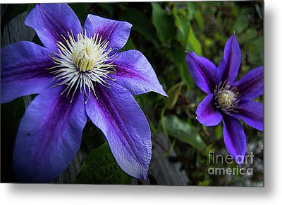 Metal Print featuring the photograph Purple Flowers by Brian Jones