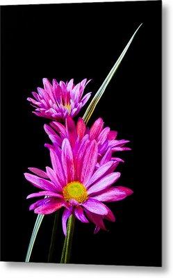 Purple Flowers Metal Print by Edward Myers