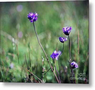 Metal Print featuring the photograph Purple Flowers by Jim and Emily Bush