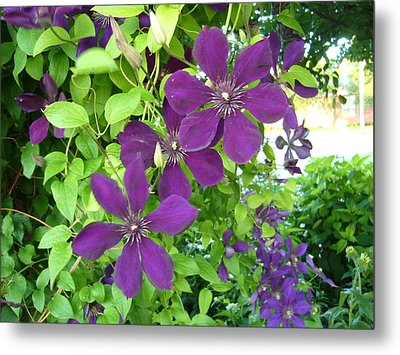 Purple Flowers Metal Print by Gonca Yengin
