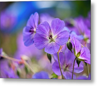 Purple Flowers Metal Print by Rae Tucker