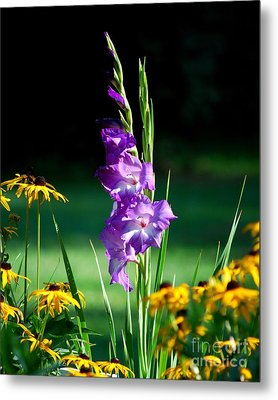 Metal Print featuring the photograph Purple Glads And Black-eyed Susans by Lila Fisher-Wenzel