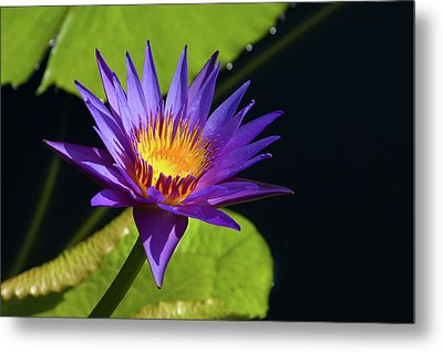 Metal Print featuring the photograph Purple Gold by Steve Stuller