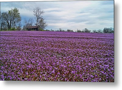 Metal Print featuring the photograph Purple Haze by Cricket Hackmann