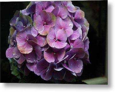 Purple Hydrangea- By Linda Woods Metal Print by Linda Woods