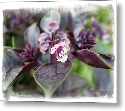 Metal Print featuring the photograph Purple In Autumn by Joan  Minchak
