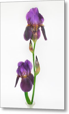 Purple Iris Duet Metal Print