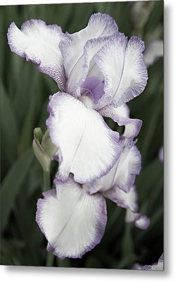 Purple Is Passion Metal Print by Sherry Hallemeier