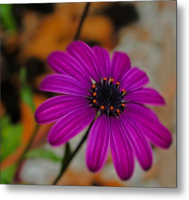 Metal Print featuring the photograph Purple  by Laura DAddona