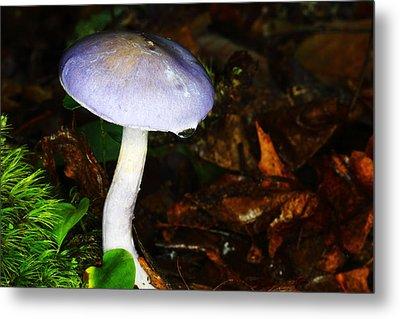 Purple Mushroom Russula Cyanoxantha Metal Print