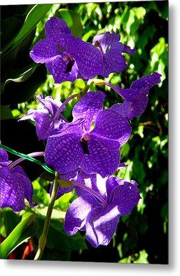 Purple Orchids Metal Print by Susanne Van Hulst