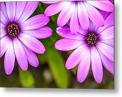 Purple Petals Metal Print by Az Jackson