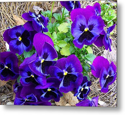 Metal Print featuring the photograph Purple Pansies by Sandi OReilly