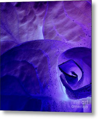 Metal Print featuring the photograph Purple Passion by Erica Hanel