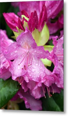 Purple Pink Metal Print by Marty Koch