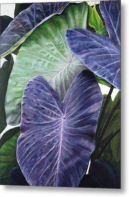 Purple Taro Metal Print by Sandra Blazel - Printscapes