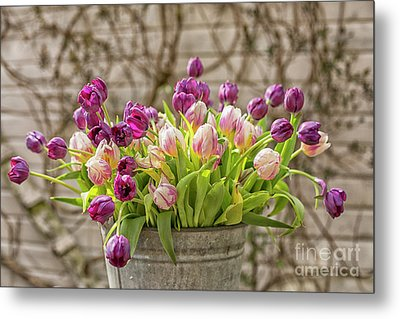 Metal Print featuring the photograph Purple Tulips In A Bucket by Patricia Hofmeester