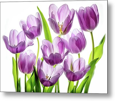Metal Print featuring the photograph Purple Tulips by Rebecca Cozart