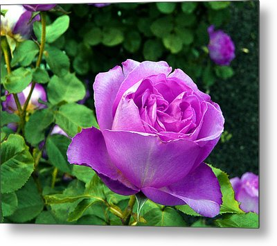 Purple Whisperings Metal Print by Kendall Eutemey