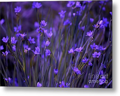 Purple Wildflowers In A Field Metal Print