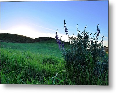 Metal Print featuring the photograph Purple Wildflowers In Beautiful Green Pastures by Matt Harang