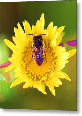 Metal Print featuring the photograph Purple Wings by John King