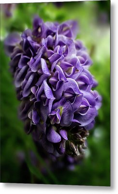 Purple Wisteria Metal Print by Greg and Chrystal Mimbs