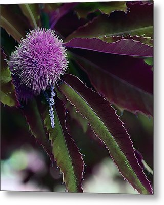 Purple Wonder Metal Print