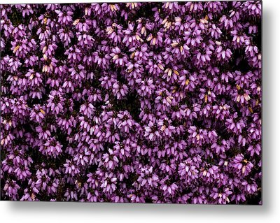Purpleness Metal Print by John Gusky