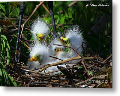 Quadruplets Metal Print by Barbara Bowen