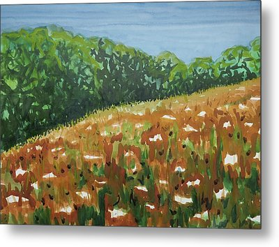 Queen Anne's Lace Field Metal Print by Bethany Lee